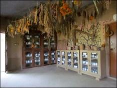Dehradun - site de Navdanya, banque de graines
