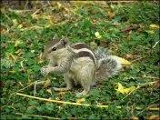 Delhi - Parc, écureuils