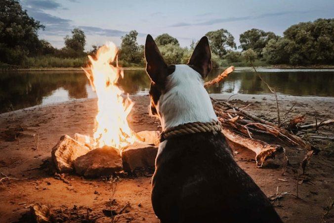 焚火を眺める犬