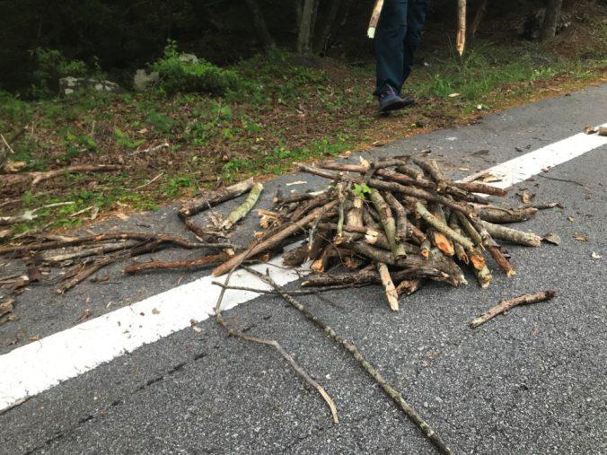 樹海で枯れ木集め