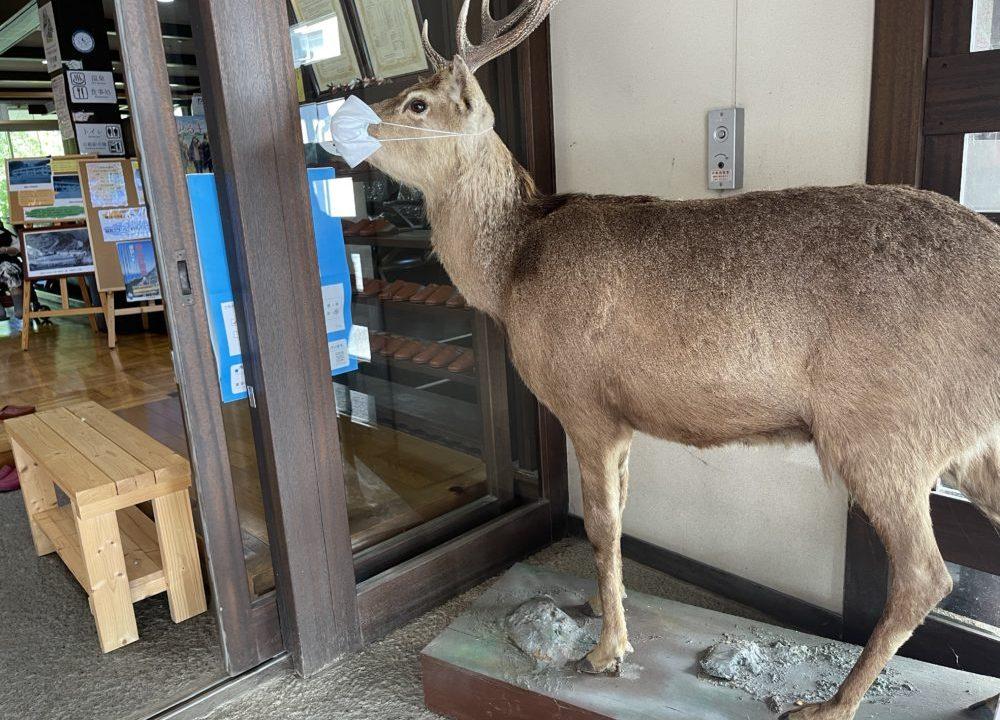 入口に鎮座する鹿の剥製