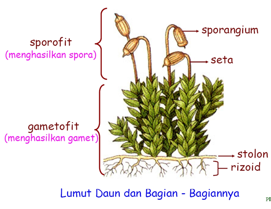 Keanekaragaman Tumbuhan  TeropongIlmu