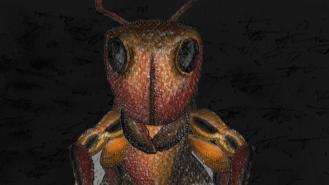 Itho | Ameisenkönigin