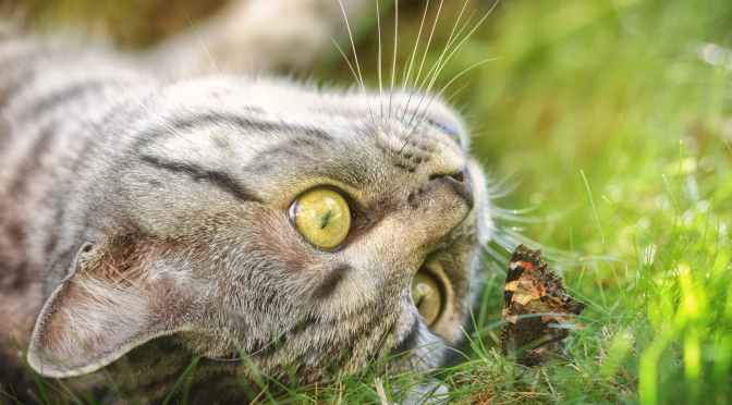 Cats and butterflies: 2 misunderstood analogies in scientistic discourse