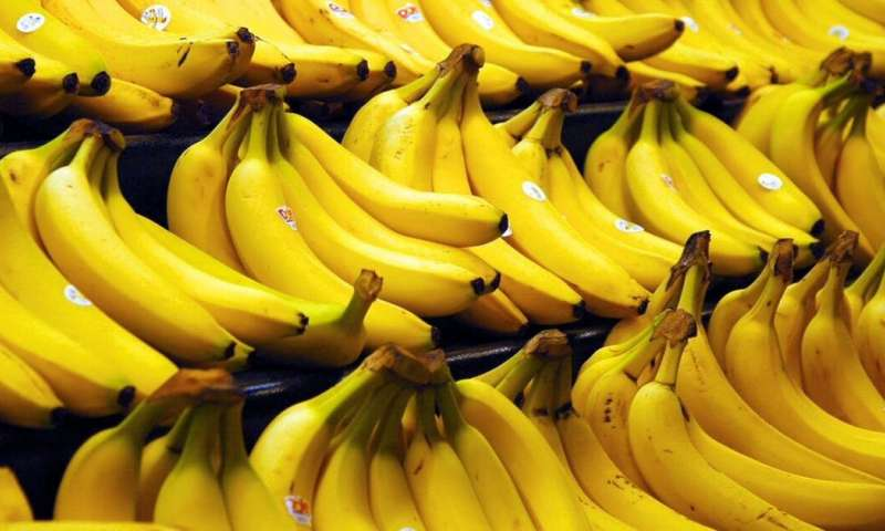 Why The Banana Business Of Chiquita And Dole Is At Risk