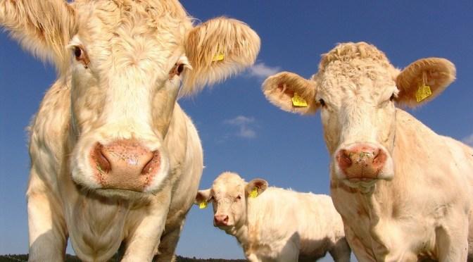 アストラル界から見て、動物を食べるってどうなの?