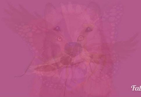 絵の中に最初に見えた動物で、あなたの魂のエッセンスが分かるテスト