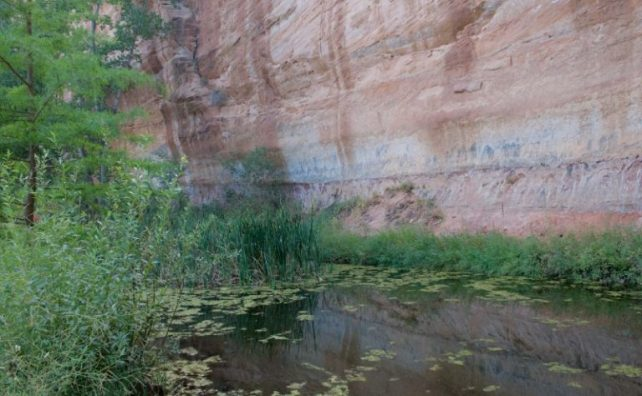 Groundwater seeps to the surface at the Best Friends animal sanctuary in Kanab, Utah. Photo by Tara Lohan.