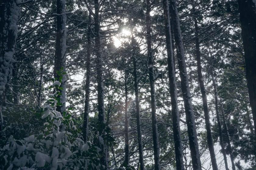 雪の京都 – Description