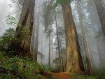Mapa mundial de altura de los bosques puede ayudarnos a entender el cambio climático