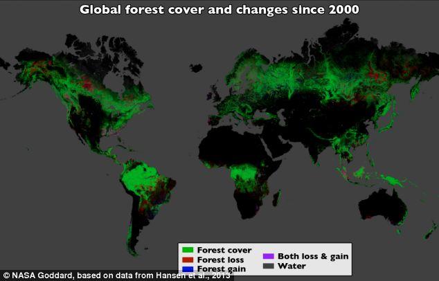 ALARMANTE: Google map revela el ritmo devastador de la deforestación en todo el Mundo