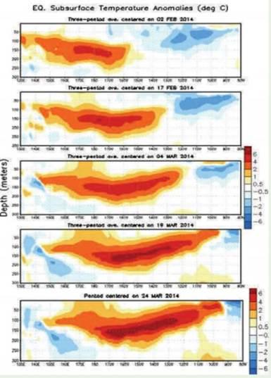 Evolución de la Temperatura bajo la superficie del Pacífico   ecuatorial. (Fuente NOAA-CPC-NCEP)