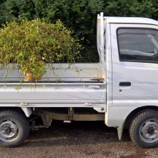 Suzuki Carry DD51T carrying an ornamental tree