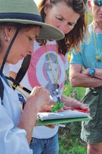 Leeann Ferlito examines a wax currant flower with a hand lens while Stacey Williams and Dan Weinstein look on. Photo by Laurelle Walsh