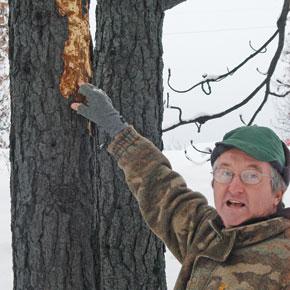 Ken Bevis turns his 'snag patch' into wildlife habitat