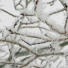 The cold, foggy weather that has blanketed the area for much of the past two weeks has produced at least one welcome effect — the interlocking crystals of hoarfrost that adorn branches, fences and snow-covered fields throughout the valley. Photo by Marcy Stamper