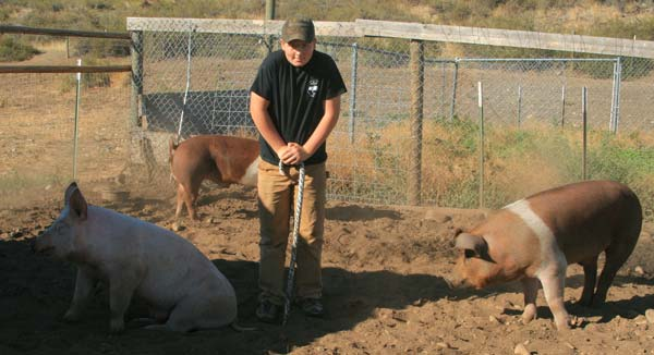 Photo by Marcy Stamper Cody Wottlin wrapped his shoelaces in duct tape because his pigs are so tempted to chew on them.