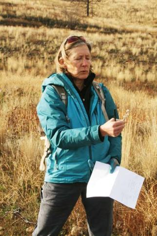 Wendy Sims identified a plant at a revegetation site burned in the 2014 Rising Eagle Road Fire.
