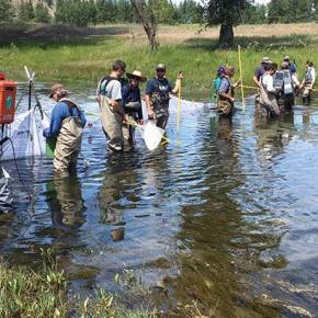 Projects restore fish habitat on Twisp, Methow rivers