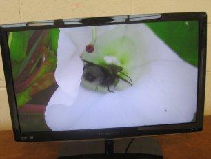 biodiversity-secret-life-of-bees-metns-nov-2013-010
