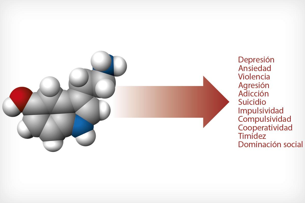 Resultado de imagen para bioquímica del cerebro y suicidio