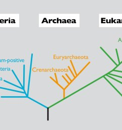 figure 1 phylogenetic relationship between members of the three domains of cellular life based on the 16s rdna gene in turn in each domain we find the  [ 1200 x 800 Pixel ]