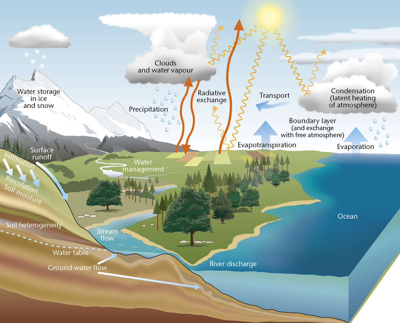 Water Cycle For Kids  Met Office
