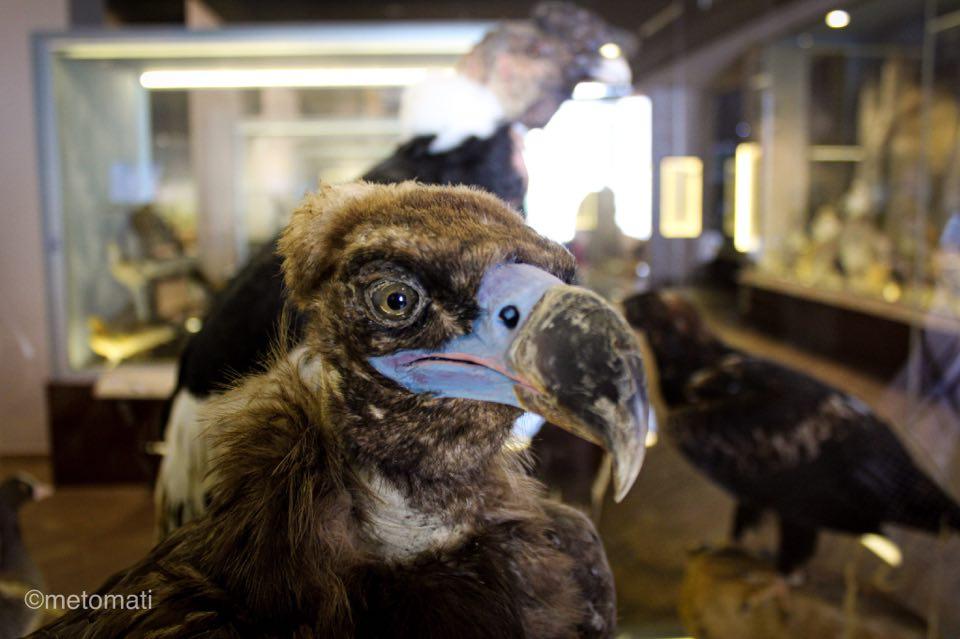 μουσείο φυσικής ιστορίας πτηνό