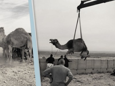 """لماذا تستهدف """"إسرائيل"""" الحيوانات؟"""
