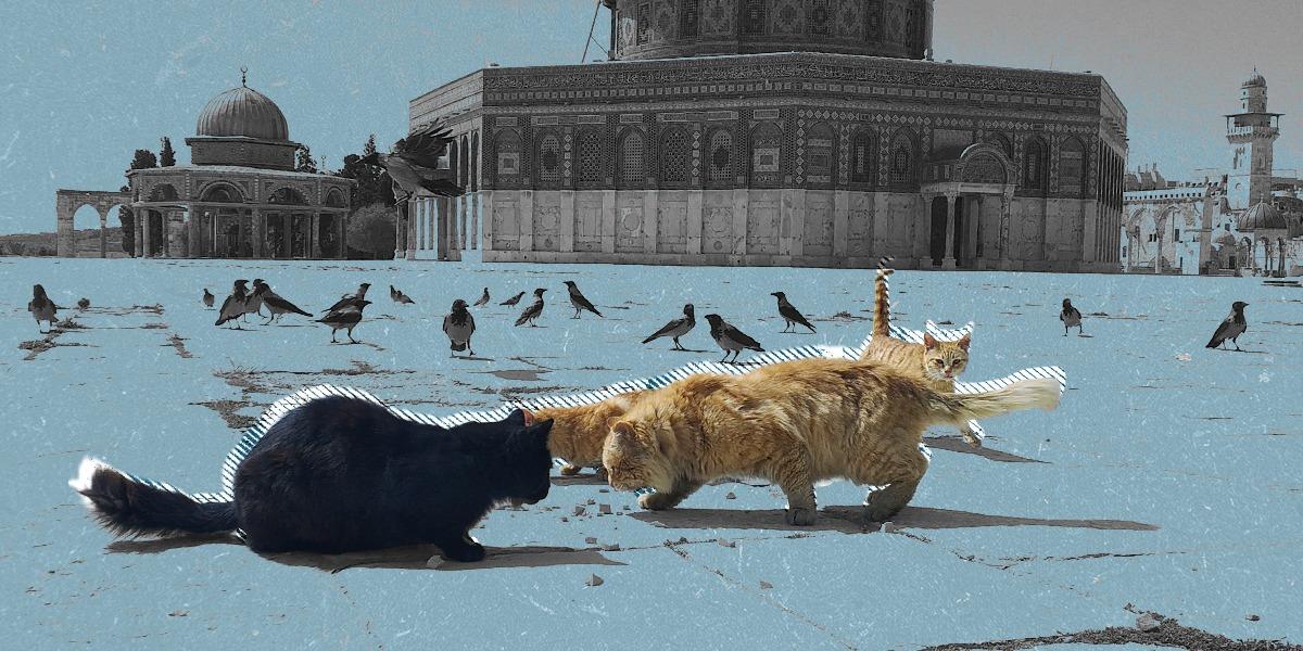 وحشةٌ ورحمة... من يُطعم القطط في ساحات الأقصى الخالية؟