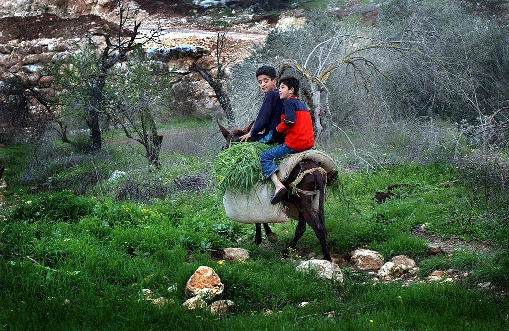 في السّهول والجبال.. جولة لمعرفة نباتات فلسطين