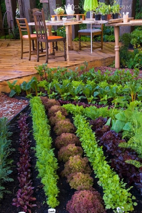 edible garden and 's metricon