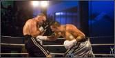 Shock-Fight2018_WBF-Salsi-11545