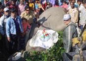 Osama the elephant