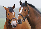 Some horses, looking nervous