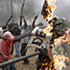 Kenyan election violence leaves 124 dead