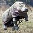 'Human hippo' suffers that sinking feeling