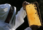 Beekeeper builds churches for bees
