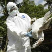 Bird flu detection 'in two hours'