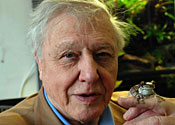 Attenborough visit sparks frog mating frenzy