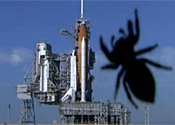 Astronauts lose spider in space