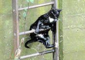 Top 10 animal escapes