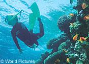 scuba diver coral reef