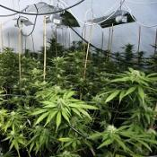 The Government's chief drug adviser has reportedly been sacked after claiming cannabis was less dangerous than alcohol