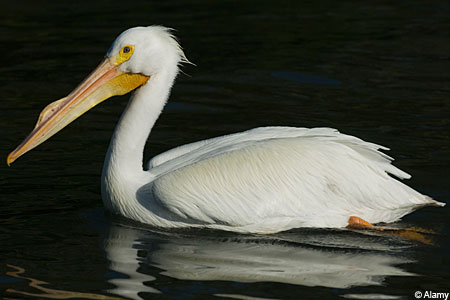 Police said the man claimed he saw a pelican.