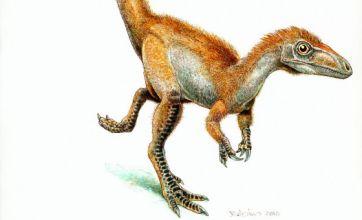 Orange dinosaur sheds light on prehistoric feathers
