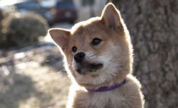 Have your tissues at the ready for Hachi: A Dog's Tale