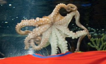 Paul the Octopus denounced as 'decadent' by Iranian president