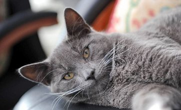 Kitten dumped in wheelie bin a 'copycat attack'