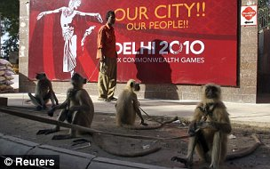 It's the police! Langur monkeys patrol the Major Dhyan Chand National Stadium in New Delhi